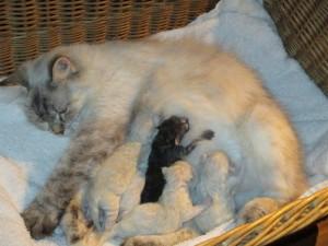 Kathinka mit Babies, geb. am 12.10.14